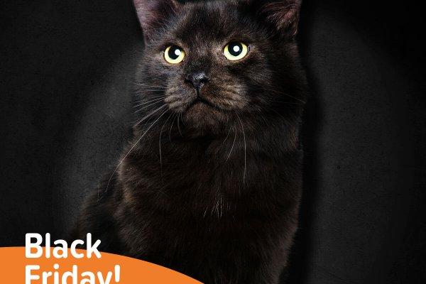 Black Friday v Pet Center